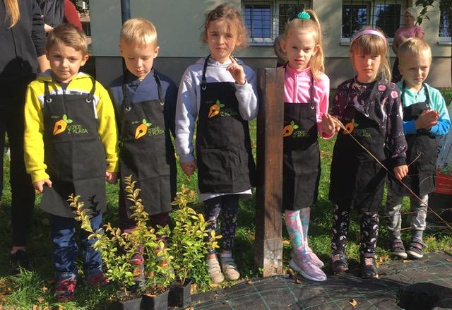 Sadzimy krokusową łąkę i krzewy